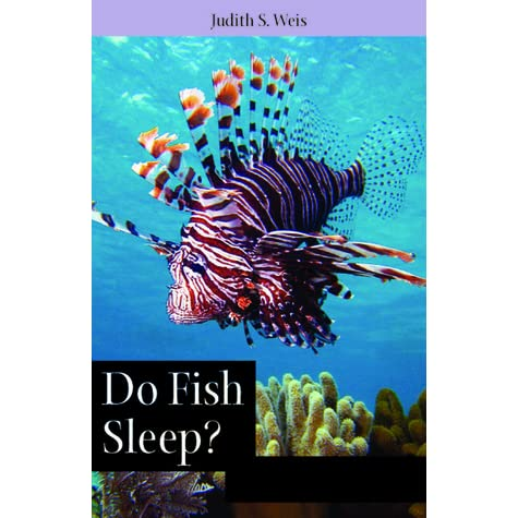 Do fish sleep fascinating answers to questions about for How do fishes sleep