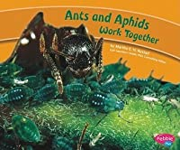 Ants and Aphids Work Together
