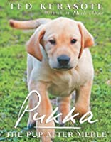Pukka: The Pup After Merle