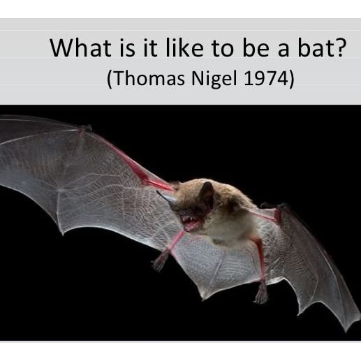 """what is it like to be a bat?, essay In nagel's paper """"what is it like to be a bat"""" he explains how we can try to imagine what being a bat would be like (eg, using sonar, sleeping upside down, eating bugs) but we can only get as far as imagining what it would be like for us to behave as a bat behaves and not how the bat truly experiences its experiences."""
