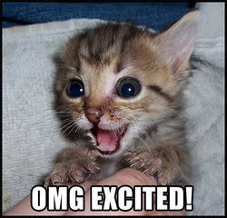 Excited Cat Pictures, Images and Photos
