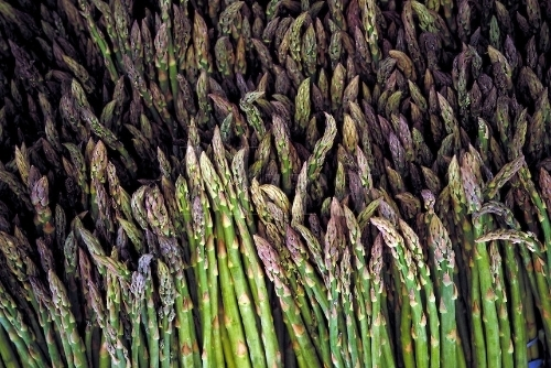 photo Asparagus_zps76aa42d0.jpg