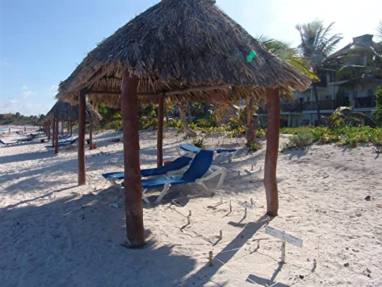 Palapa sorrounded by turtle nests
