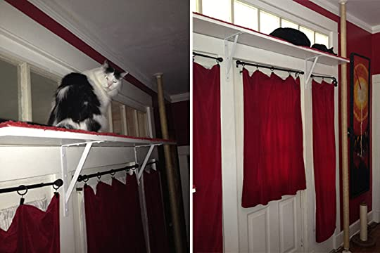 jackson galaxy 39 s blog catification diy royal red cat climbing shelves plus giant scratching. Black Bedroom Furniture Sets. Home Design Ideas