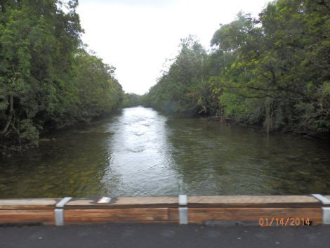 Small river flowing through Daintree National Park