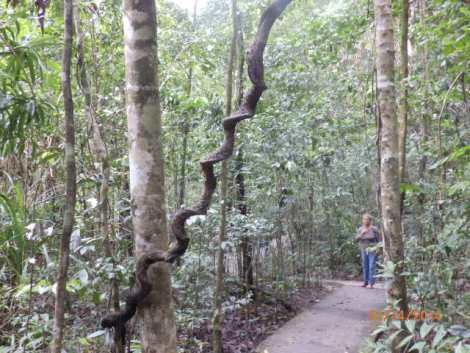 Twisting vines along the path, like a giant wooden swizzle sticks