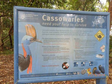 Exotic cassawaries, rare and endangered