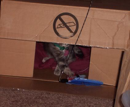 First few weeks he spent in hiding. This was the box we brought him home in.