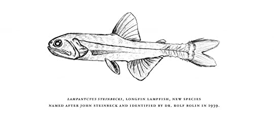 Lampanyctus steinbeck
