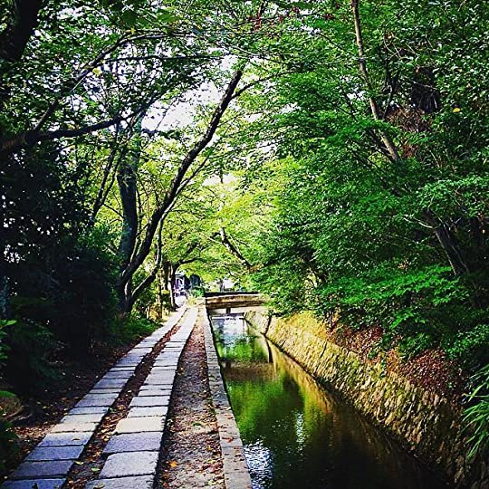 Cherry trees in the Philosopher's Path in Kyoto during summertime.