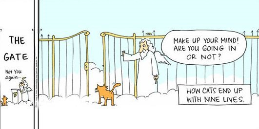 Cat at the Pearly Gates