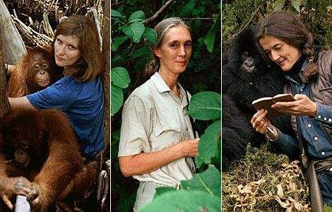 the life and contributions of jane goodall Jane goodall movies observing chimps in africa chimp behavior discoveries jane goodall's books book controversy accolades related videos the general public was introduced to jane goodall's life work via miss goodall and the wild chimpanzees, first broadcast on american television on.