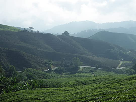 Cameron Highlands near Tanah Rata, where the novel is set.