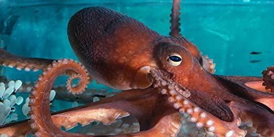 Child research paper on octopus