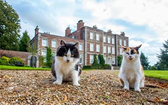 stately-homes-cats