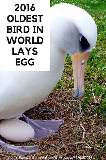 Oldest bird in world lays new egg at age 66. Read her story.   DarcyPattison.com