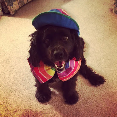 dogs, dog in costume, clown