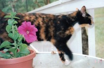 cat, feisty cat, feral, Hawai'i, Honolulu Humane society, death of a pet, moving with a pet, aging cat, special cat food, yowling cat