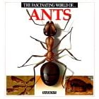 The Fascinating World of Ants - Angels Julivert