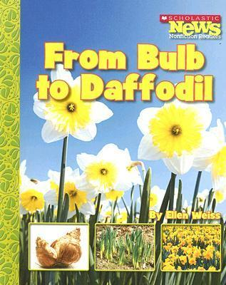 From Bulb to Daffodil  by  Ellen Weiss
