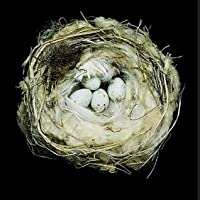 Nests: Fifty Nests and the Birds That Built Them