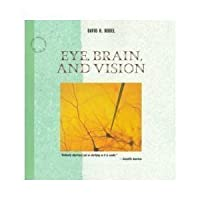 Eye, Brain and Vision (Scientific American Library)
