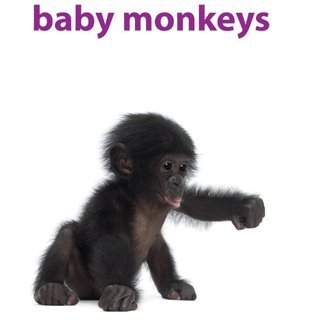 Baby Monkeys: Pictures and facts about all types of monkeys  by  Tim Crutch
