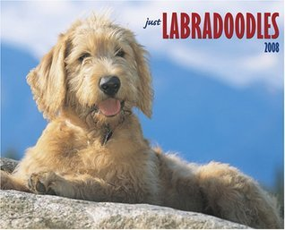Just Labradoodles 2008 Calendar (Just  by  NOT A BOOK