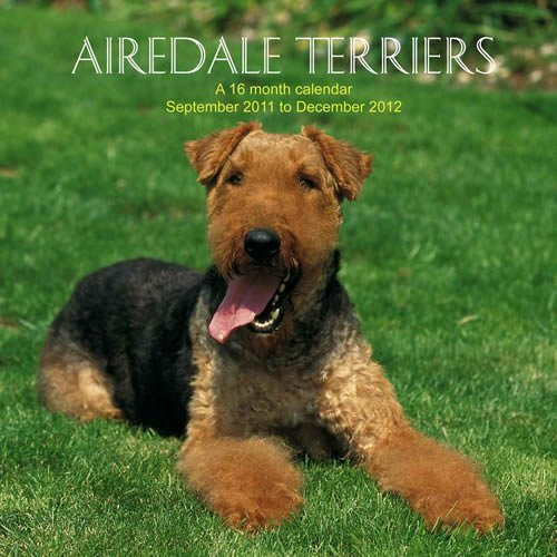 Airedale Terriers 2012 Wall Calendar #DOG01 Magnum Publications