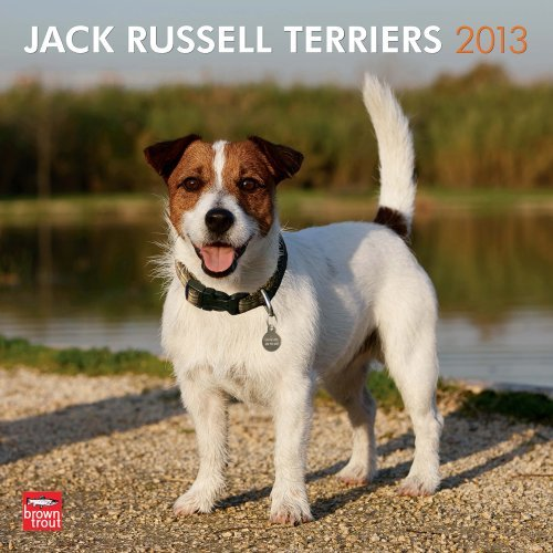 Jack Russells (Intl) 2013 Square 12X12 Wall  by  NOT A BOOK