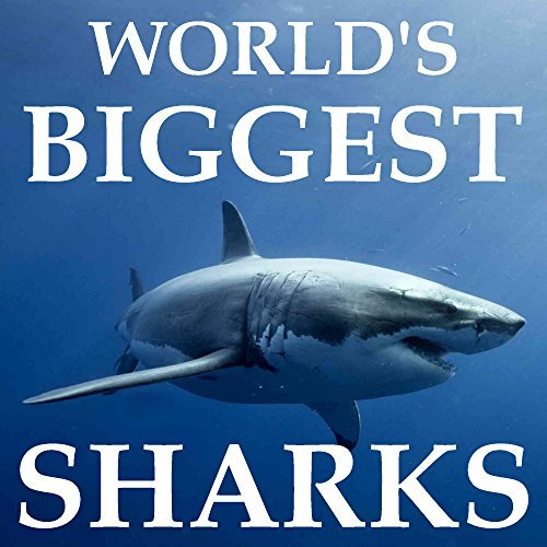 Childrens Book: Worlds Biggest Sharks: [Shark Books] [Sharks for Kids] [Shark Facts Book]  by  Kevin Smith