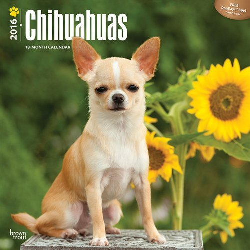 Chihuahuas 2016 Wall  by  Browntrout Publishers