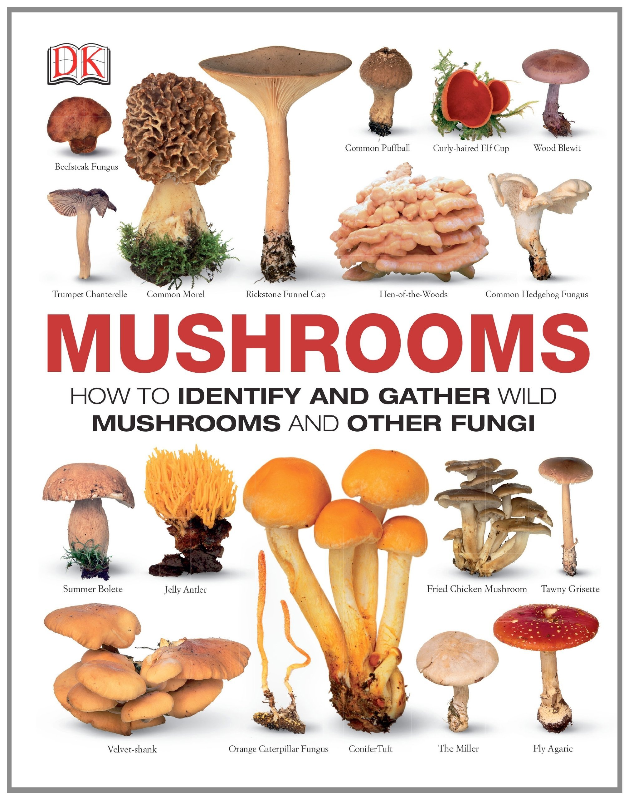 Mushrooms: How To Identify and Gather Wild Mushrooms and Other Fungi Thomas Læssøe