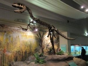 photo Megalosaurus_World_Museum_Liverpool_zps65629262.jpg