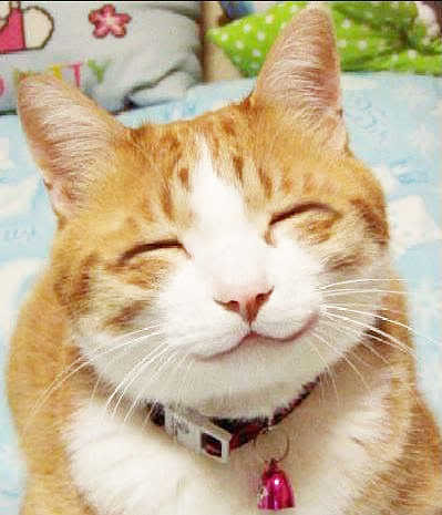 Smile cat Pictures, Images and Photos