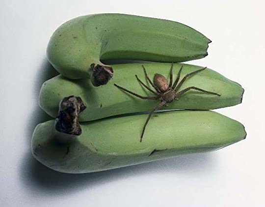 wandering spider on a banana