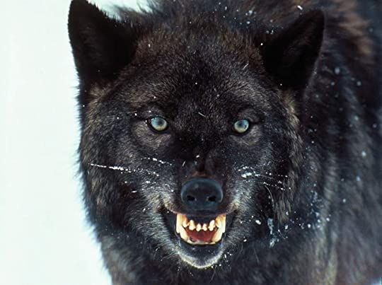 who wouldn't flip seeing this guy growling?