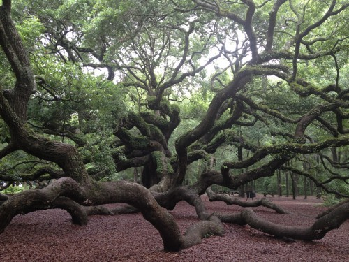 photo taken by me at the Angel Oak this summer