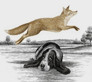 Fox jumping over dog