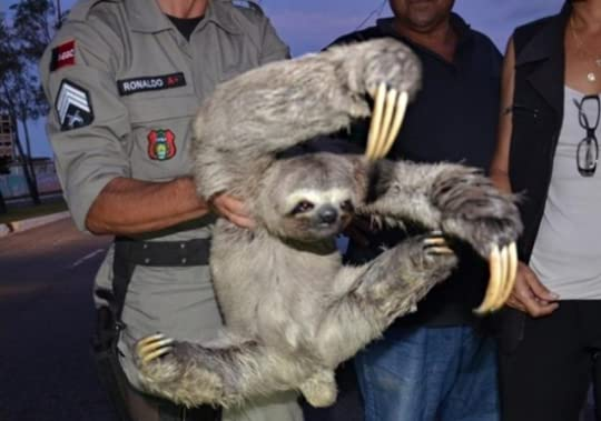 sloth and cop