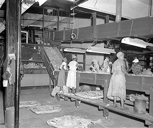 Photo courtesy of The Daily Reflector - Image of the Imperial Tobacco Company - Women sorting tobacco