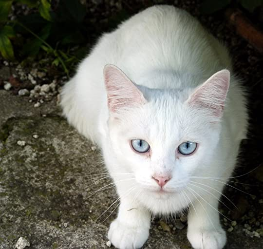 Good Names For White Cats With Blue Eyes
