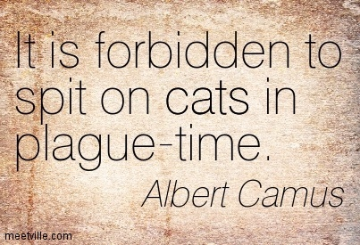 It is forbidden to spit on cats in plague-time.