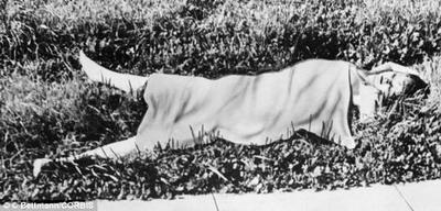 Elizabeth Short aka The Black Dahlia 1947