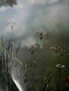 Robert Frost Country - The Tuft of Flowers