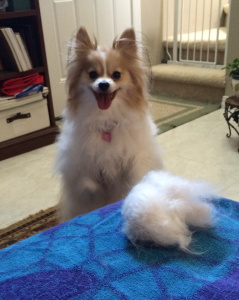 Look, Mom! You could knit another dog with that.