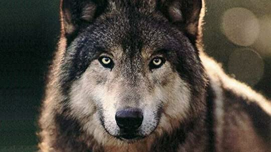 super strength and speed  Wolf Quotes About Strength