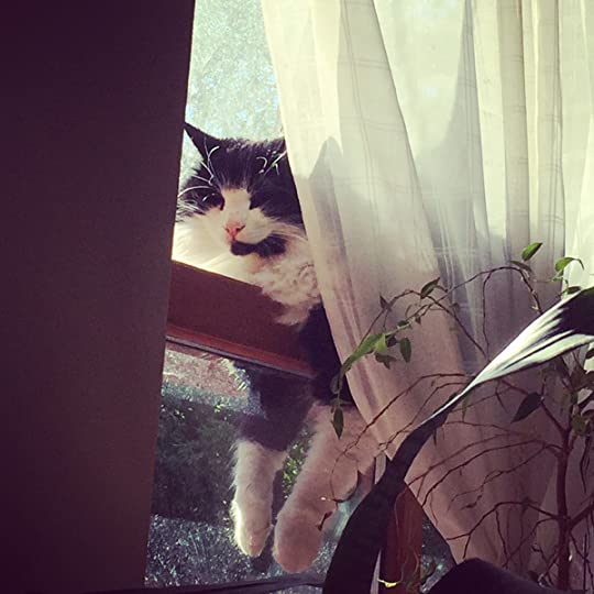 Neighbour Cat at the window