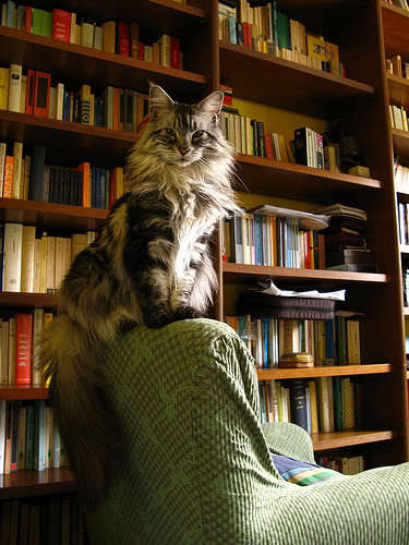 bibliophile photo: Catophile Bibliophile The_librarian_by_Mushu23.jpg