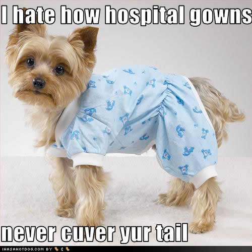 dog in hospital gown
